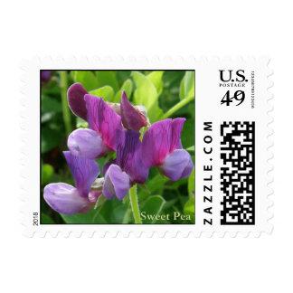 Sweet Pea (Lathyrus maritimus) on Unalaska Island Postage