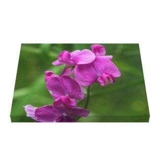 Sweet Pea Pink Wildflowers Floral Canvas Print