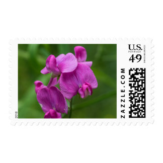 Sweet Pea Pretty Pink Wildflower Postage Stamps