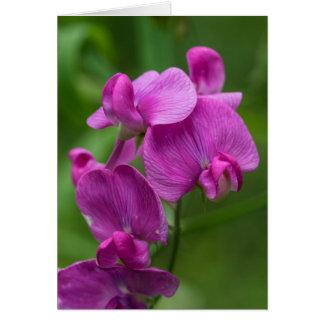 Sweet Pea Pretty Pink Wildflowers Floral Card