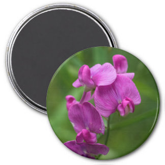 Sweet Pea Pretty Pink Wildflowers Floral Magnet