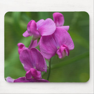 Sweet Pea Pretty Pink Wildflowers Floral Mousepad