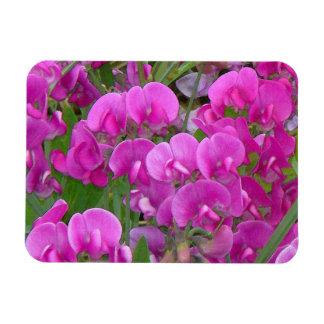 Sweet Peas Flowers Premium Magnet