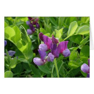 Sweet Peas, Lathyrus maritimus Card