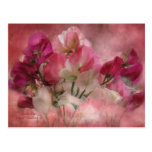 Sweet Peas Postcard