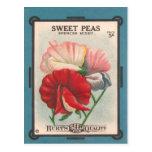 Sweet Peas Postcard