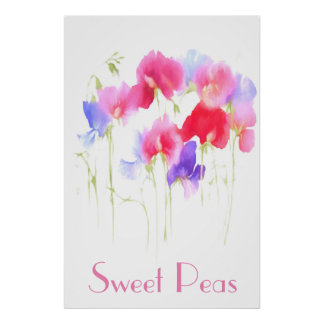 SWEET PEAS WATERCOLOUR STYLE POSTER