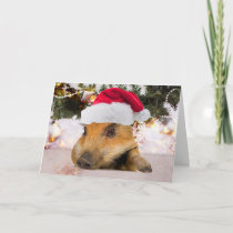 Sweet Pig In Santa Hat Christmas Tree Holiday Card