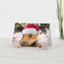 Sweet Pig In Santa Hat Christmas Tree Holiday Card