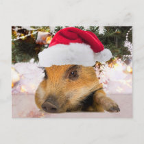 Sweet Pig In Santa Hat Christmas Tree Holiday Postcard