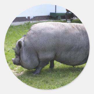 Sweet Piggy   Animal Farm Classic Round Sticker