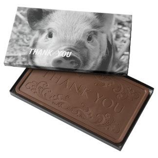 sweet piglet, black white 2 pound milk chocolate bar box