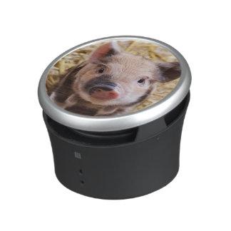 sweet piglet speaker