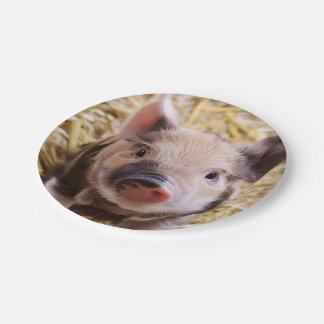 sweet piglet paper plate