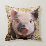sweet piglet pillow