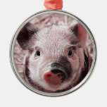sweet piglet pink round metal christmas ornament