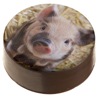 sweet piglet chocolate dipped oreo