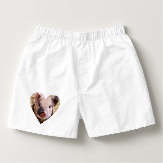 Sweet piglet boxers