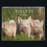 """Sweet Piglets 2018 - Baby Pigs Wall Calendar<br><div class=""""desc"""">These adorable piglets will keep your heart warm even when the nights are cool.  Piglet photographs copyright Steven Holt and Brenda Moseley.</div>"""