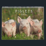 "Sweet Piglets 2018 - Baby Pigs Wall Calendar<br><div class=""desc"">These adorable piglets will keep your heart warm even when the nights are cool.  Piglet photographs copyright Steven Holt and Brenda Moseley.</div>"