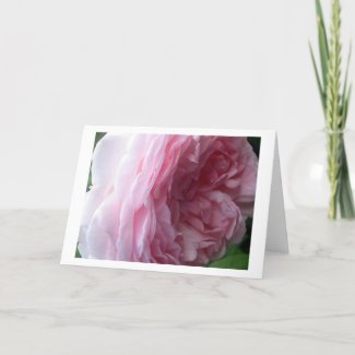 Sweet Pink Cascade Rose Note or Greeting Cards