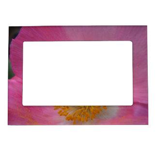 Sweet Pink Poppy Magnetic Frame