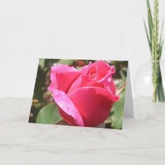 Sweet Pink Rose Bud Flower Greeting or Note Cards