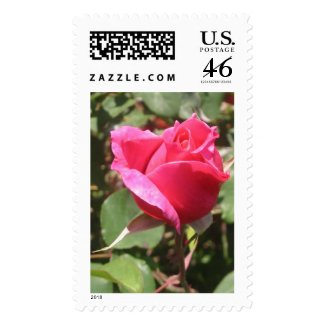 Sweet Pink Rose Bud Flower Photo Postage Stamps