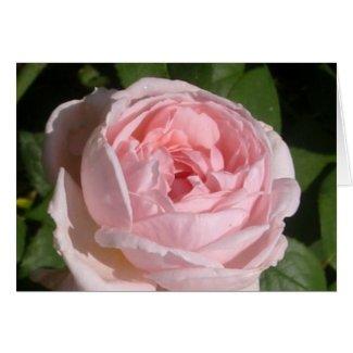 Sweet Pink Rose Card
