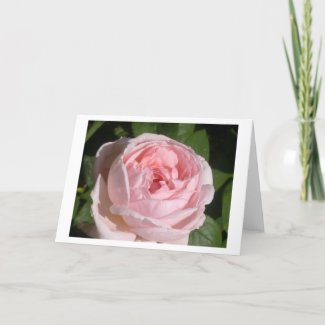 Sweet Pink Rose Greeting or Note Cards