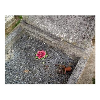 Sweet pink rose post card