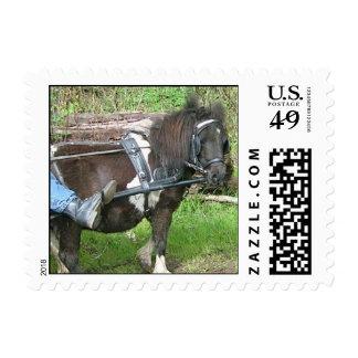 Sweet Pony Stamp