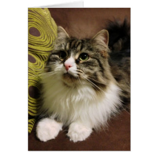 Sweet Portrait of a Siberian Cat Card