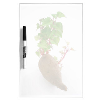 Sweet potato plant sprouts Dry-Erase board