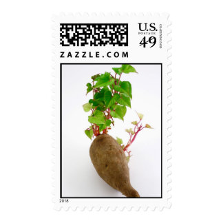 Sweet potato plant sprouts postage