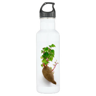 Sweet potato plant sprouts water bottle