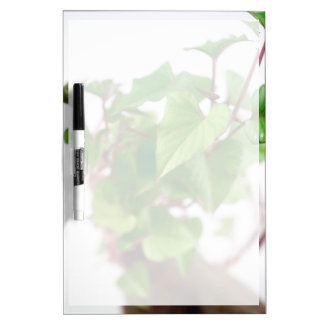Sweet potato sprouts dry erase whiteboards