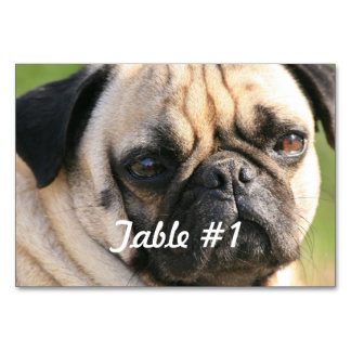 Sweet Pug Dog Card