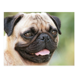 Sweet Pug Dog Photo Cards and Gifts