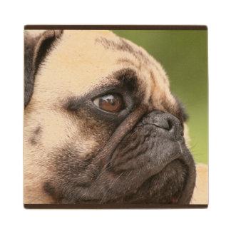Sweet Pug Maple Wood Coaster
