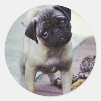 Sweet Pug Puppy Sticker