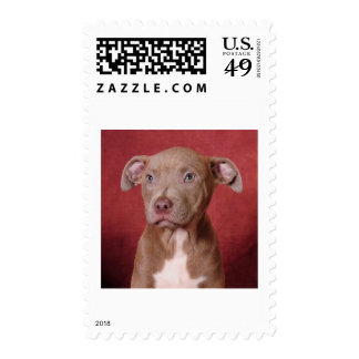Sweet pup postage stamp