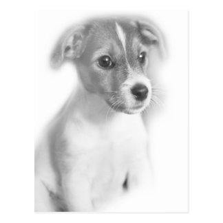 Sweet puppy postcard
