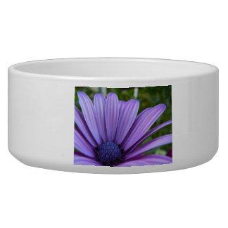 Sweet Purple Daisy Bowl