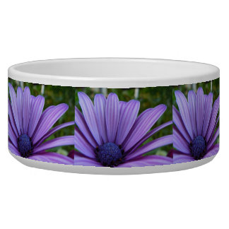 Sweet Purple Daisy Bowl