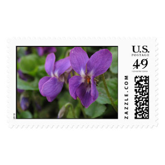 Sweet Purple Violets Stamps