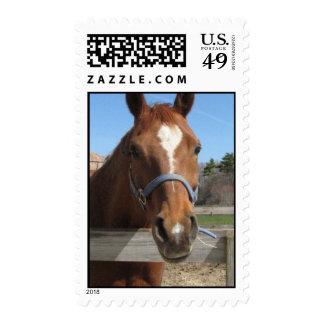 Sweet Quarter Horse Postage Stamp