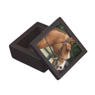 Sweet Quarter Horse Premium Gift Box