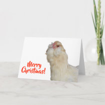 Sweet Rare Wheaten Ameraucana Hen Merry Christmas Card