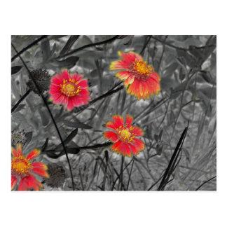 Sweet Red Flower Postcard